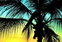 Palmier qui te font voyager