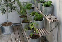 3311 Belden Garden / Ideas for the 2013 garden!
