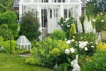 Garden / by annika kartau
