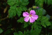 photos nature by Kinolus