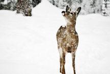 deer / by Tommy Tomew