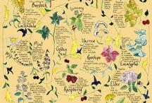Healing herbs and food