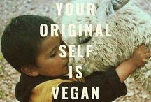 Dyr og kjærlighet