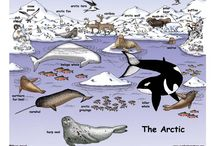 Artic sealife
