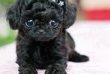 Mini hunder