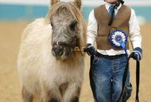 Konie kuce kucyki jazda konno ♥