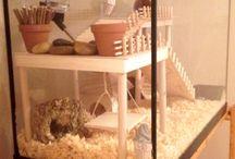 Rakennelmia hamstereille