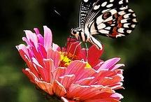 butterfly / by karen fab