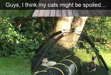 Fajne pomysły dla kota