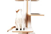 Pet Fun! / by Design Public