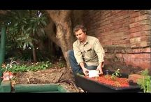 Aquaponic YouTube  / by Neddy Newitt