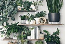 kvety - interier