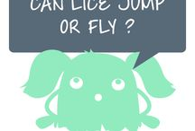 POPULAR QUESTIONS FROM MOMS / Can lice jump or fly? Absolutely not! They are transferred through direct contact. Learn more about head lice and nits.