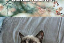 NurseSue / The cat's meowwwwww.