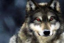 lobos da noite  / ele são maior perigoço por isso: eu sou fã dele um dele e meu favorito
