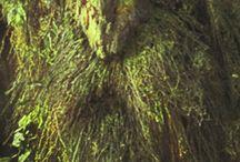 green man / by Alexis Deer