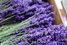 Lavender / by My Soulful Home