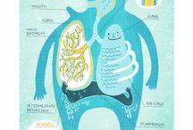 инфографика системы органов