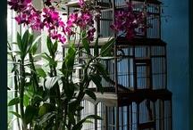 FLOWER : Orchids / Orchidées