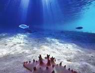 THEME / Under the sea
