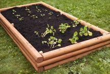 Udvar, kert (Garden) - magaságy (Raised Garden Bed)