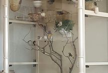 kandang burung