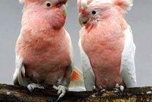 Πολύχρωμα πουλιά908
