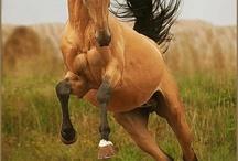 Les chevaux / Du cheval que du cheval!