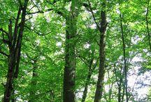 Mazurski Park Krajobrazowy / W granicach Mazurskiego  Parku Krajobrazowego znajduje się największe w Polsce jezioro Śniardwy oraz północna część Puszczy Piskiej z rzeką Krutynią.