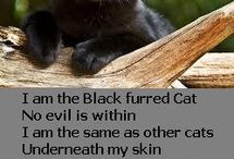 Snooky/Black Cats