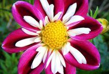 Virágok, flowers / Különleges virágok