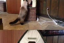 funny cats!