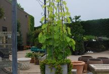 GARDEN IDEAS / by Barbara Sissel