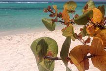 Repubblica Dominicana / Viaggio tra Bayahibe, Isola di Saona, Isola di Catalina, Rio Chavon, a Romana