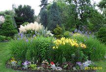 kwiaty / kwiatki które rozweselają ogrodek!
