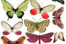 sommerfugle og insekter