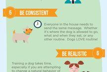 Koiran koulutusvinkit