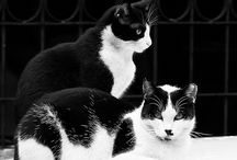 Black and White / by Mari-j Carpenter