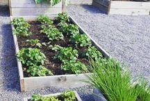 Törnrosvägen / Min trädgård
