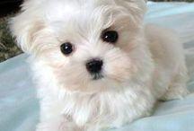 cachorrinhos lindos que quero ter ❤