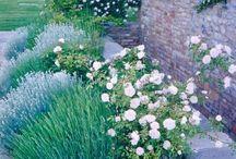 French Garden Ideas