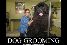 Dog Grooming / A collection of dog grooming pins