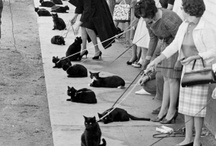 Black Cat Auditions / All images by Ralph Crane