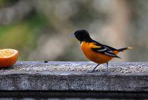Habitat: Birds