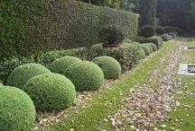 Topiary & Parterre