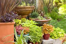 Potplants and Container Gardening