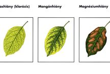 Növény v.