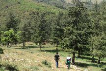 Trekking / Alla scoperta del Parco delle Madonie, lungo itinerari pensati per voi e adatti a grandi e piccini!