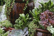 Home - Succulent