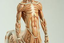 Art: Anatomy